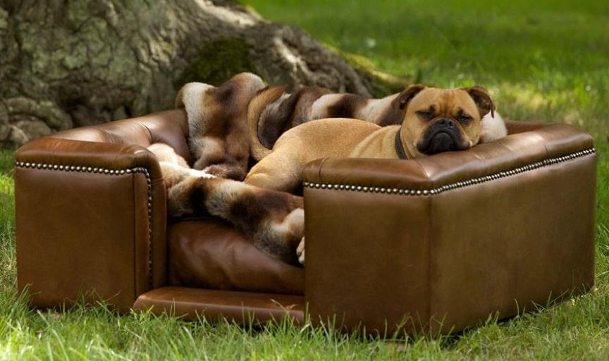 Luxury Hotel Dog Beds